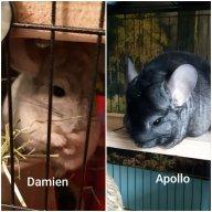 Apollo and Damien