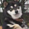 Doggzilla