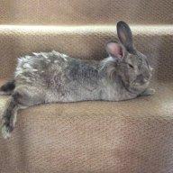 rabbit_friend