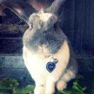 Bennie_bunny_mom
