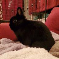 Bumble Bunny