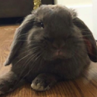 Bunnyrabbitbella
