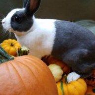 bunnylove2024