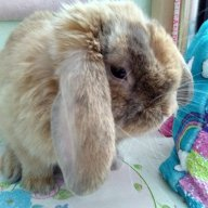 bunny_lover_13