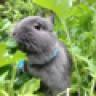 BunnySilver