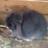 RabbitsForever303