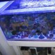 Red C Aquarium