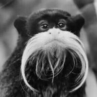 MonkeyMick