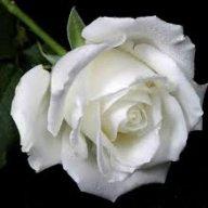 White Rose Al